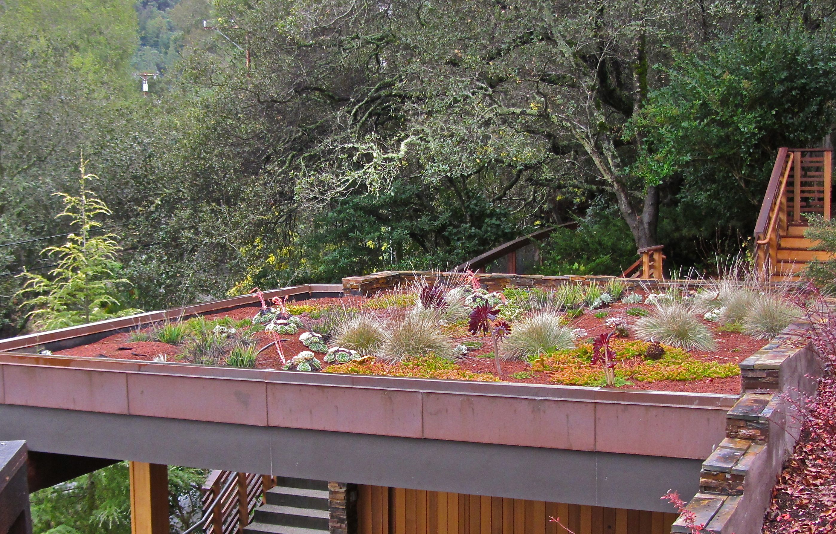 green roof alliance greening the bay area one roof at a time