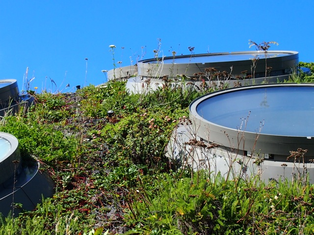 Green Roof Portholes